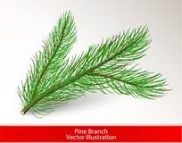 Ramo di pino verde realistico isolato su fondo bianco Spazzola di arte dell'ago del pino e dell'oggetto per progettazione Illustr immagine stock libera da diritti