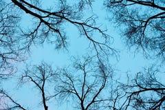 Ramo di Siluette dell'albero sul cielo Fotografia Stock Libera da Diritti