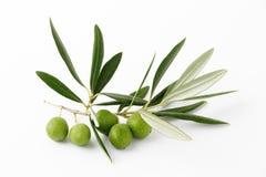 Ramo di ulivo e olives#3 verde Fotografia Stock Libera da Diritti