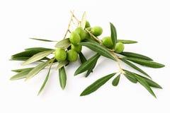 Ramo di ulivo e olives#2 verde Fotografie Stock