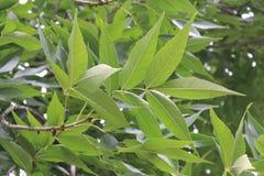 Ramo di un albero fotografia stock