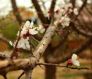 Ramo di un albero con i fiori Immagini Stock Libere da Diritti