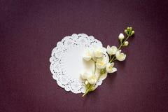 Ramo di un gelsomino di fioritura su un fondo porpora di pendenza Immagini Stock Libere da Diritti