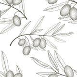 Ramo di verdure floreale di olivo del modello con le olive sopra il backgro bianco Immagini Stock