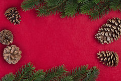 Ramo do abeto do Natal Fotos de Stock