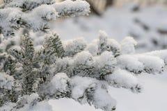 Ramo do abeto vermelho coberto com o fundo da luz do sol da neve do inverno da neve fotos de stock royalty free