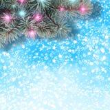 Ramo do abeto vermelho com festões e luzes brilhantes Imagem de Stock