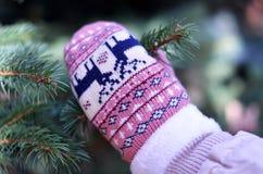 Ramo do abeto vermelho do mitene do inverno Fotografia de Stock Royalty Free