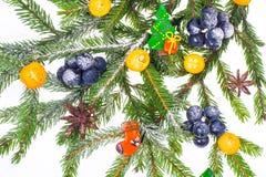 Ramo do ano novo e do Natal do abeto vermelho, decorado com frutos fotos de stock