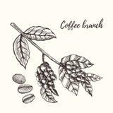 Ramo do café com baga Ilustração desenhada mão Foto de Stock