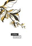 Ramo do café com folhas e feijões de café Estilo retro, pop art Vetor Fotos de Stock