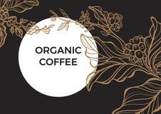 Ramo do café com folhas e os feijões de café naturais Vetor retro do vintage molde Imagens de Stock