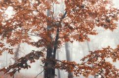 Ramo do detalhe do outono com folhas vermelhas Imagem de Stock Royalty Free