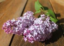 Ramo do lilás em pranchas Fotos de Stock Royalty Free