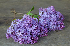Ramo do lilás em pranchas Foto de Stock Royalty Free