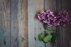 Ramo do lilás em uma tabela de madeira rústica, espaço da cópia imagem de stock