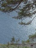 Ramo do pinho na perspectiva da água Foto de Stock Royalty Free