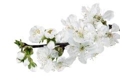 Ramo do ramo com flores. Isolado no fundo branco. Imagens de Stock