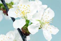 Ramo do sprig com flores. no fundo branco. Imagem de Stock