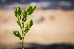 Ramo dos mirtilos com flor Imagem de Stock Royalty Free