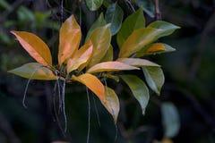 Ramo dos testes padrões e das texturas em Autumn Colored Leaves imagens de stock