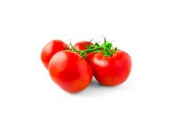 Ramo dos tomates isolado no fundo branco Imagens de Stock