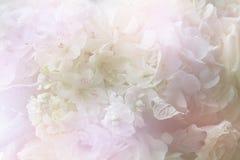 Ramo dulce colorido de la flor aislado en fondo primer Fotos de archivo libres de regalías