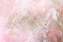 Ramo dulce colorido de la flor aislado en fondo primer Imágenes de archivo libres de regalías