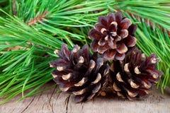 ramo e cones da Natal-árvore no fundo de madeira Foto de Stock