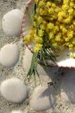 Ramo e coperture della mimosa Fotografie Stock Libere da Diritti