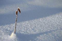 Ramo e foglia di inverno Immagini Stock