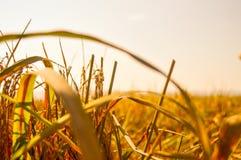 Ramo e folhas amarelos da almofada Foto de Stock
