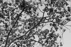 Ramo e folhas de árvore Imagem de Stock Royalty Free