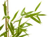Ramo e folhas de bambu no fundo branco foto de stock