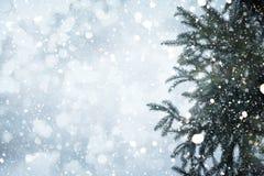Ramo e precipitazioni nevose del pino dell'albero di Natale sul fondo del cielo Immagine Stock