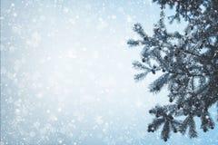 Ramo e queda de neve do pinho da árvore de Natal no fundo do céu Foto de Stock Royalty Free