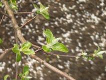 Ramo e terra de árvore Foto de Stock