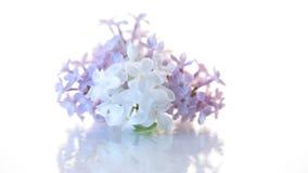 Ramo floreciente de la primavera de lila aislado en blanco almacen de video