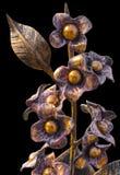 Ramo forjado de flores en un florero metálico, de oro en el color, aislado en un fondo homogéneo Imágenes de archivo libres de regalías