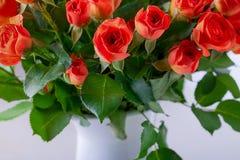 Ramo grande de rosas rojas Fotos de archivo