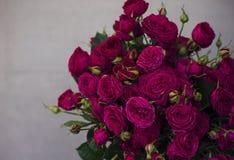 Ramo grande de rosas rosadas oscuras hermosas en fondo gris Fotografía de archivo