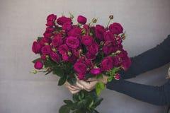Ramo grande de rosas rosadas oscuras hermosas en manos de la mujer en gris Fotos de archivo