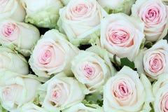 Ramo grande recientemente de rosas blancas grandes del corte. Fotos de archivo