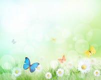 Ramo hermoso con las mariposas ilustración del vector