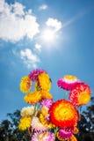 Ramo hermoso de flores secas coloridas de la paja o de w eterno Fotografía de archivo