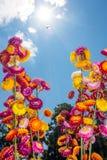 Ramo hermoso de flores secas coloridas de la paja o de w eterno Foto de archivo