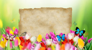 Ramo hermoso de los tulipanes con las mariposas ilustración del vector