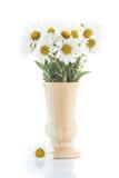 Ramo hermoso de margaritas blancas Imagenes de archivo