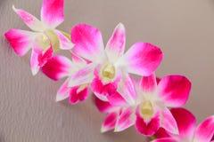 Ramo hermoso de orquídeas púrpuras Imagenes de archivo