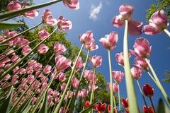 Ramo hermoso de tulipanes imagenes de archivo